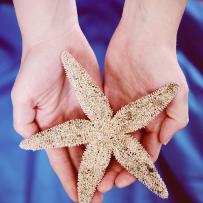 starfish-30